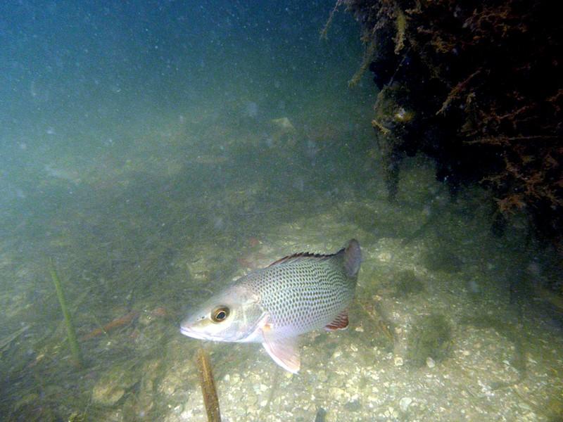 nov 01 1082 longboat fish