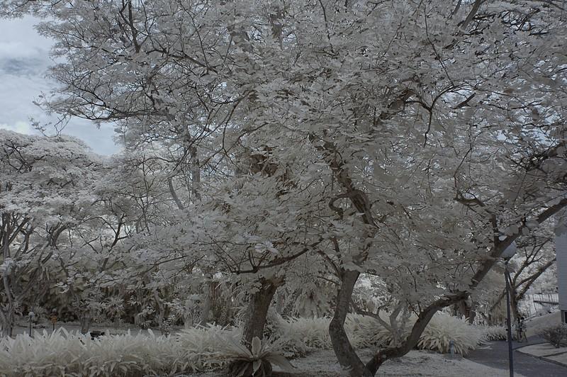 nov 04 8474 nus tree