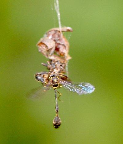 nov 04 8582 wasp dinner