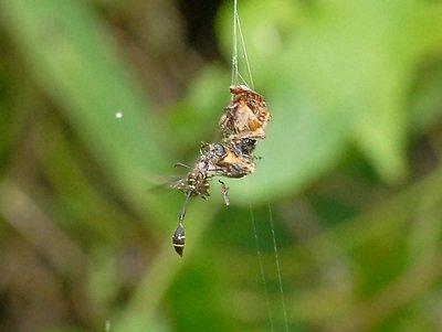 nov 04 8607 wasp dinner