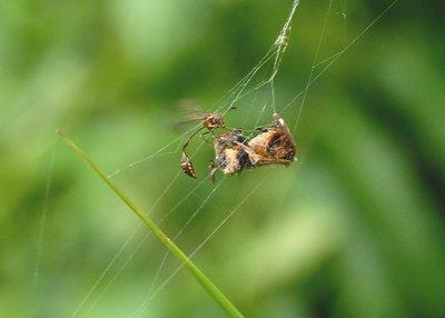 nov 04 8614 wasp dinner