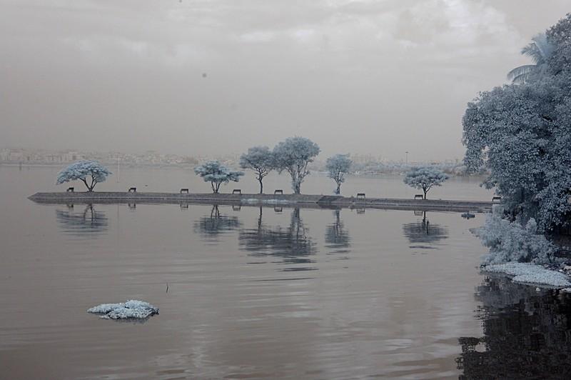 nov 11 8960 trees