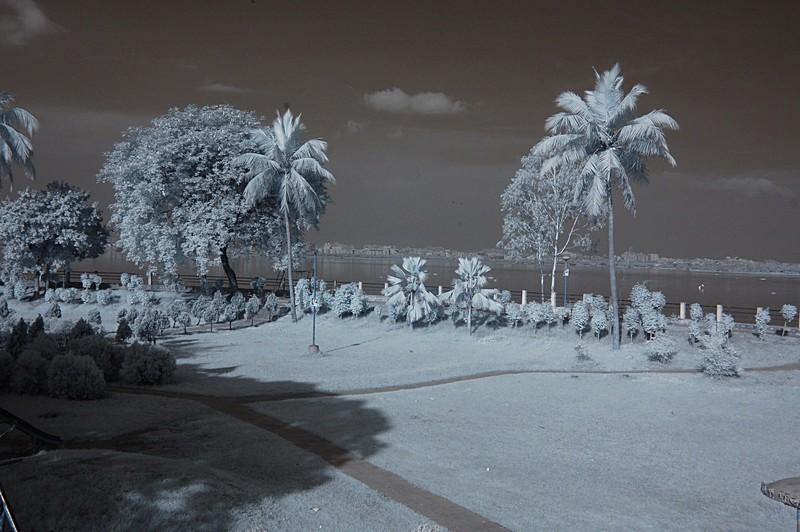 nov 11 8986 palm lake