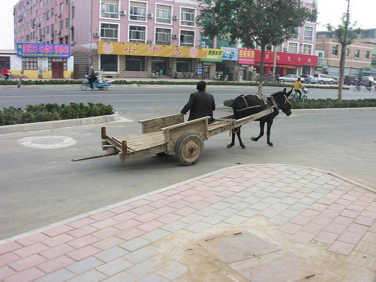 nov 20 0242 donkey