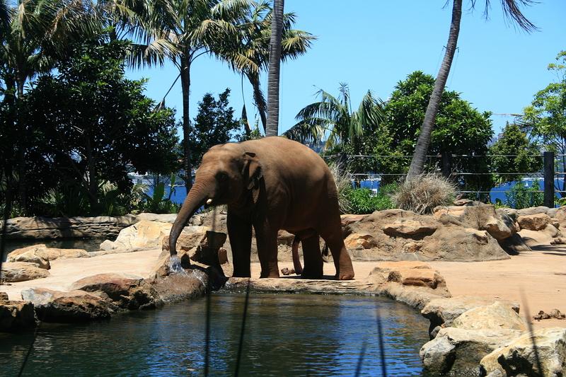 nov 20 3816 elephant