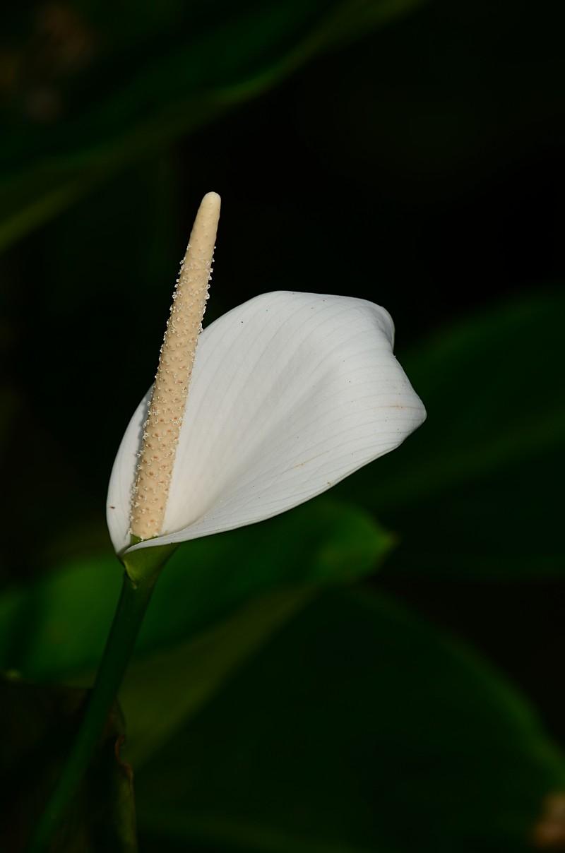 nov 20 4982 white flower