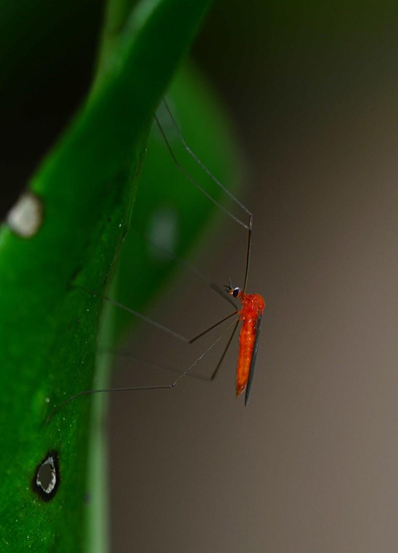 nov 20 5002 crane fly