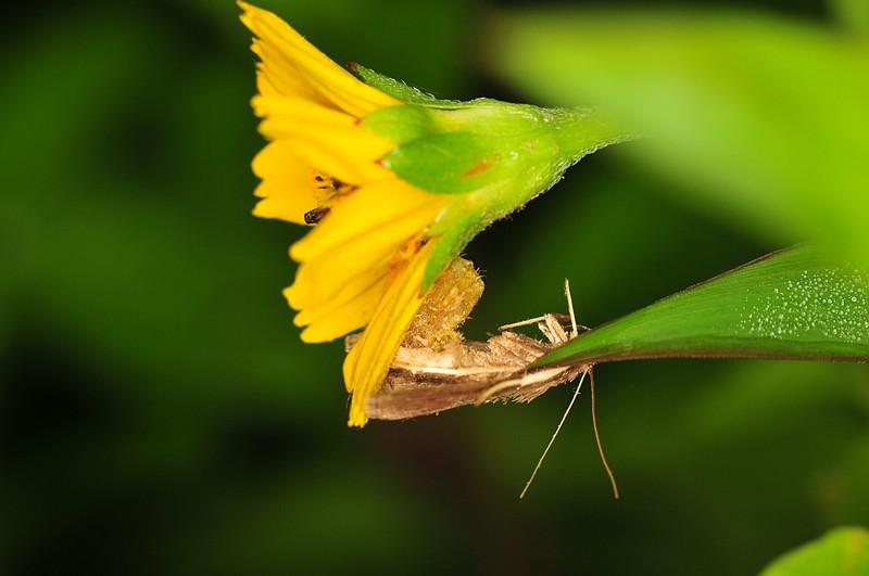 nov 20 6867 spider moth