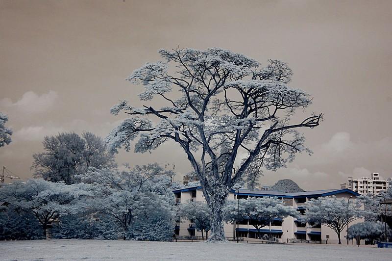nov 20 9042 tree