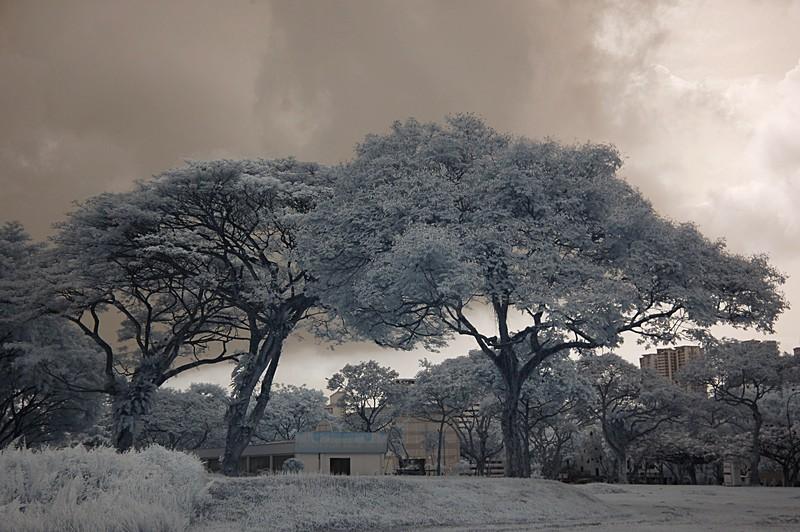 nov 20 9098 trees