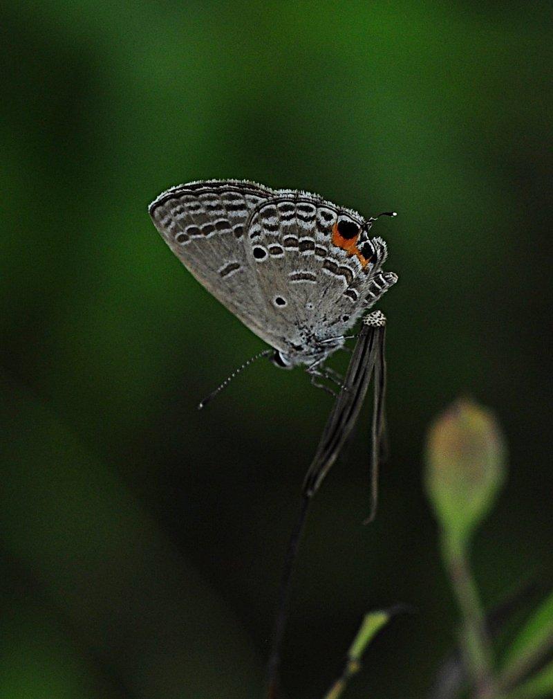nov 20 9653 white bfly