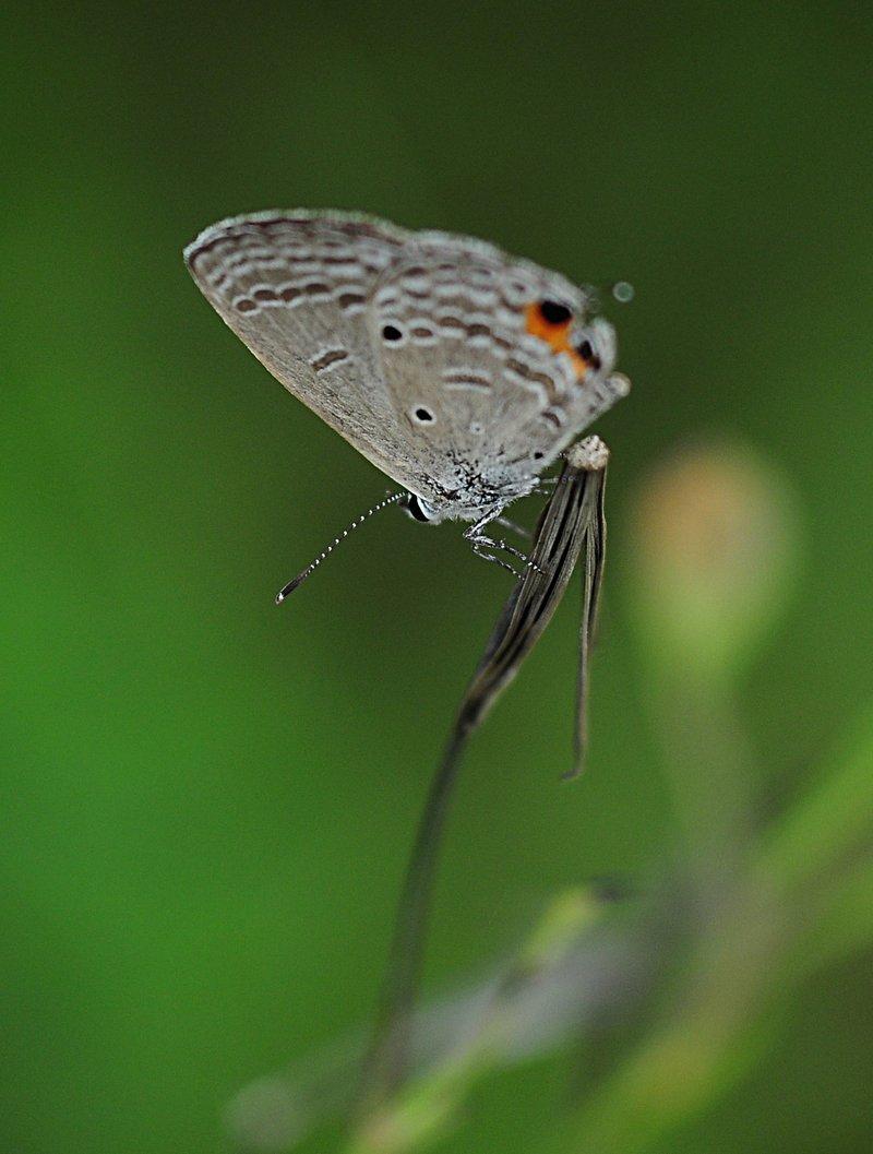 nov 20 9658 white bfly