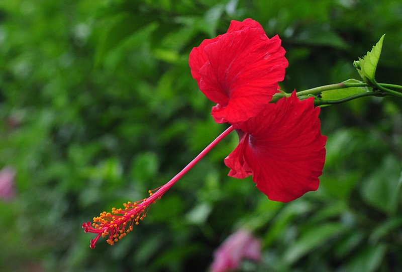 nov 20 9710 red flower