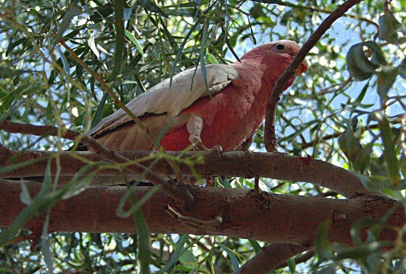 nov 22 4440 colorful bird