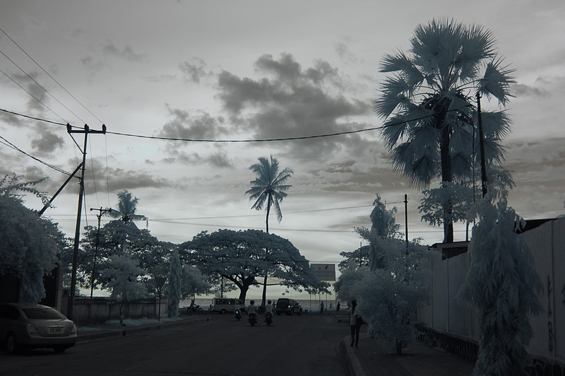 nov 23 9256 palm ocean