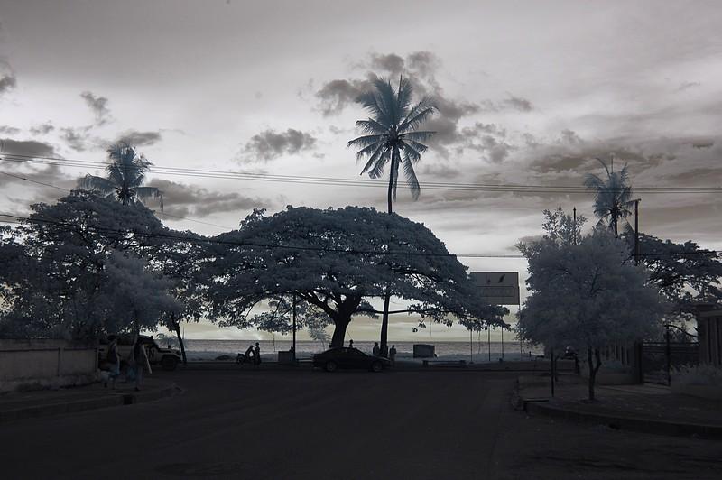 nov 23 9261 palm