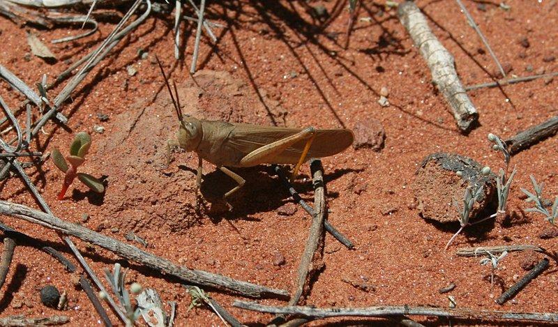 nov_24_4934_grasshopper.jpg