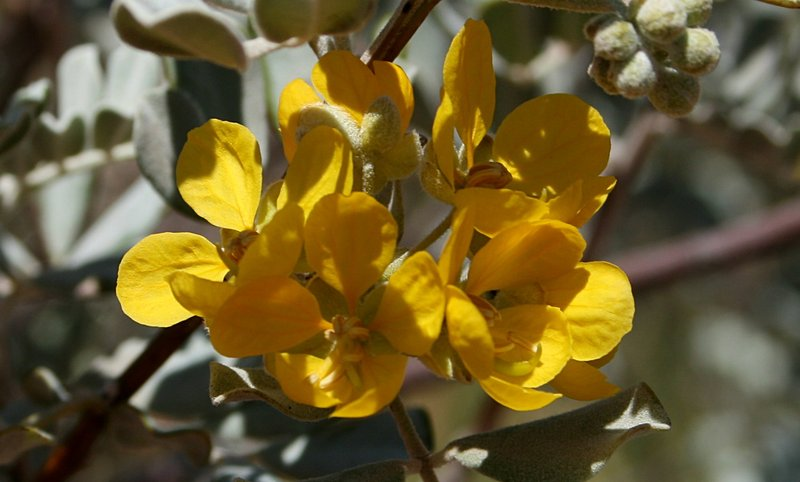 nov_24_4937_yellow_flower.jpg