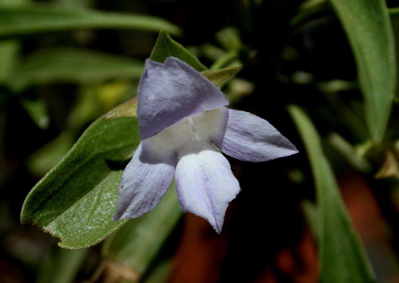nov_24_4946_purple_flower.jpg