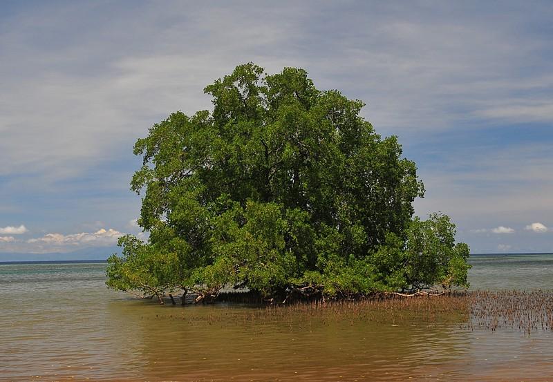 nov 24 7195 tree