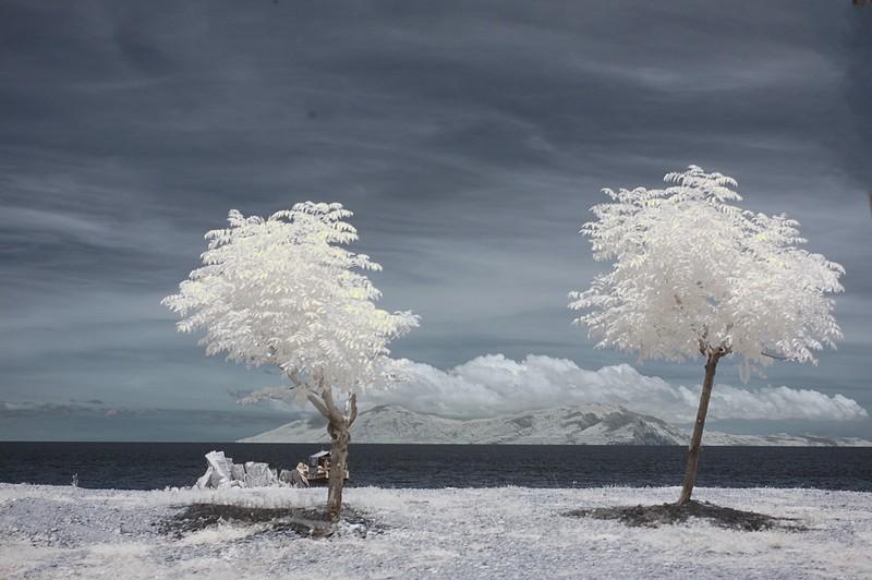 nov 24 9363 two trees island
