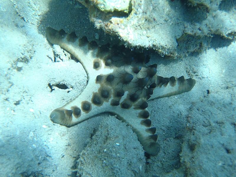 nov 26 2953 starfish