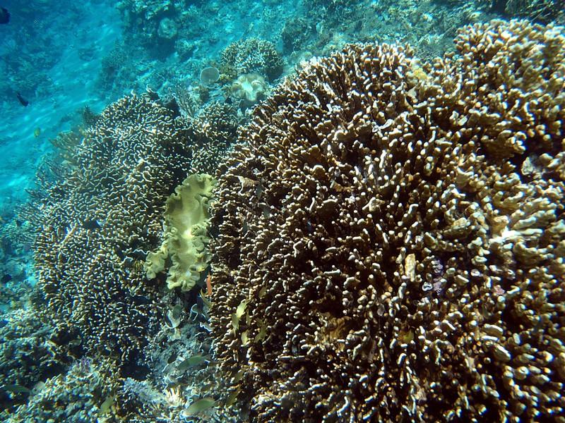 nov 26 2987 coral