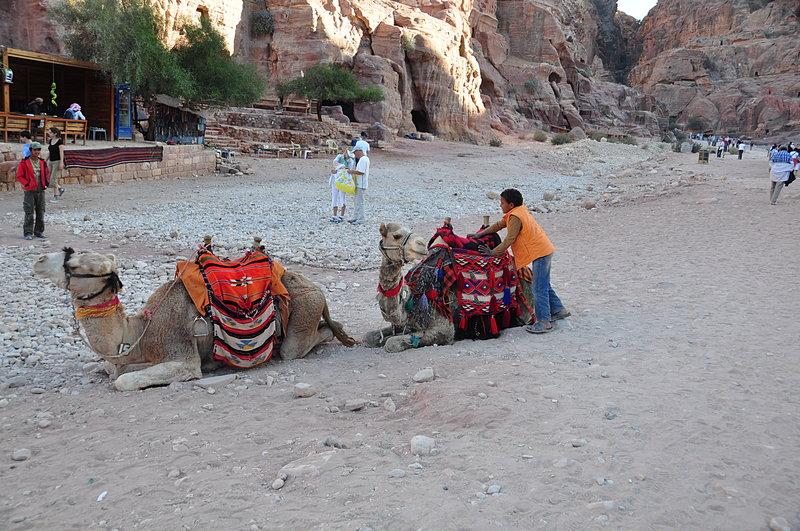 nov 26 5706 2 camels