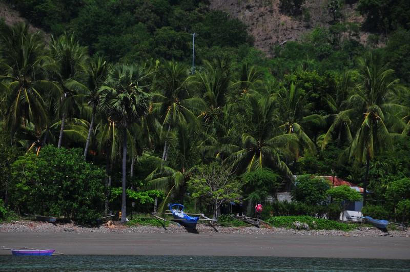 nov 26 7523 palms boats