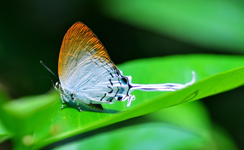 oct 02 2169 butterfly tail