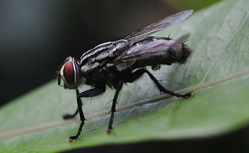oct 02 2259 fly close