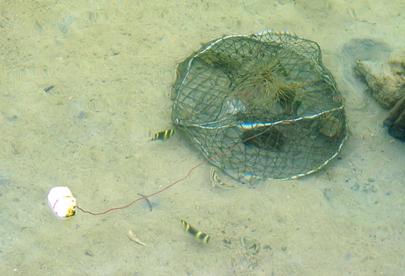 oct 04 4523 3 fish crab
