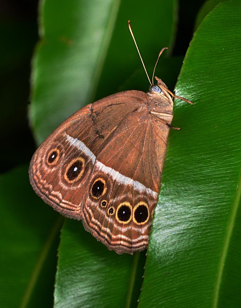 oct 06 0344 moth