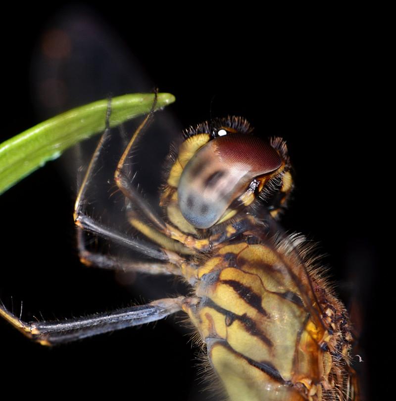 oct 06 0350 dfly eye