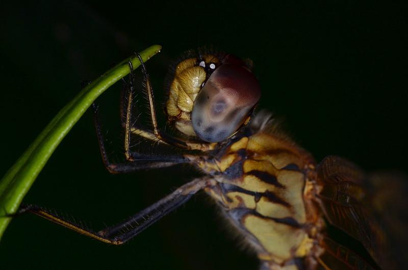 oct 06 0354 dfly eye