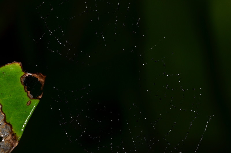 oct 06 0379 small web