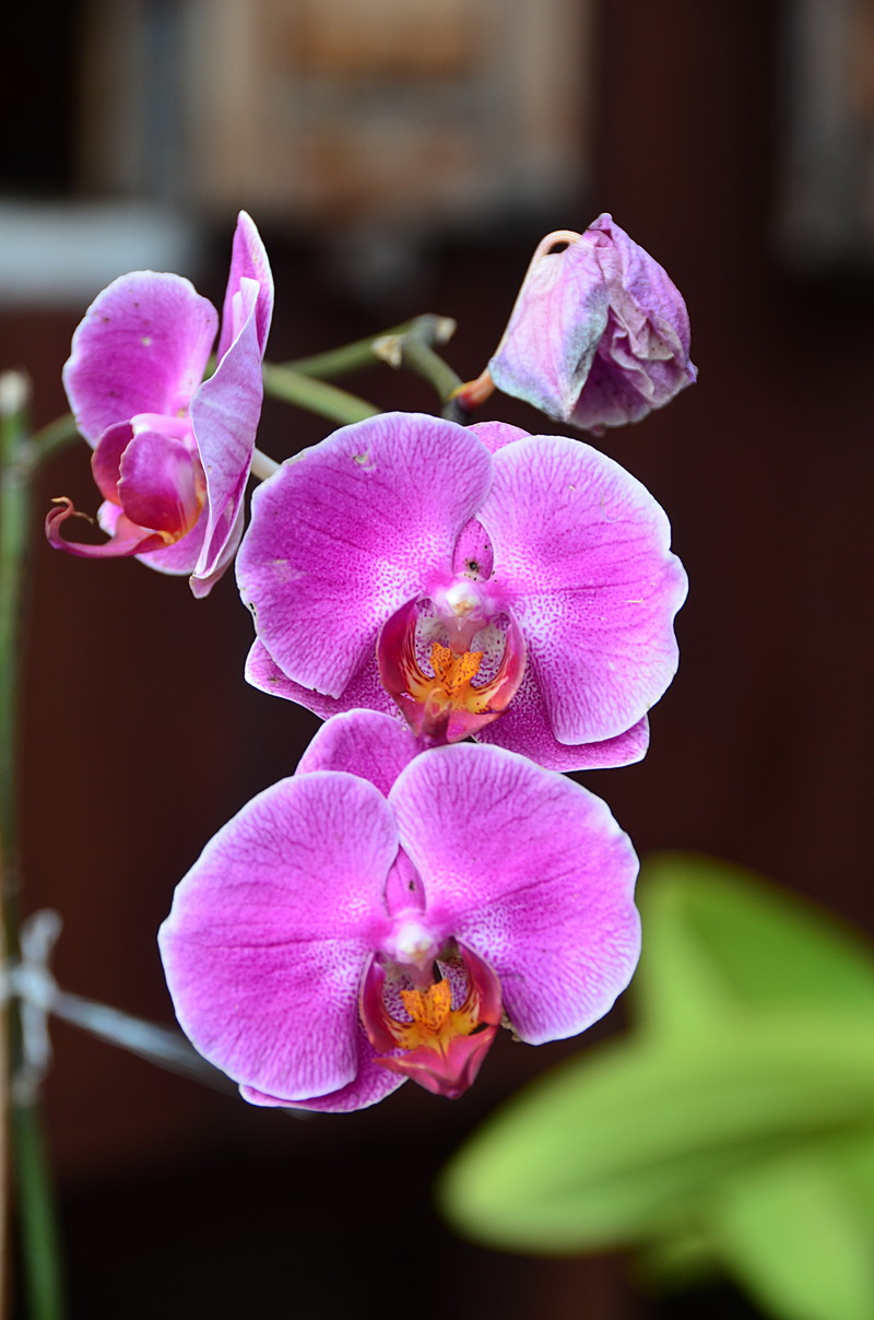 oct 12 1133 orchids