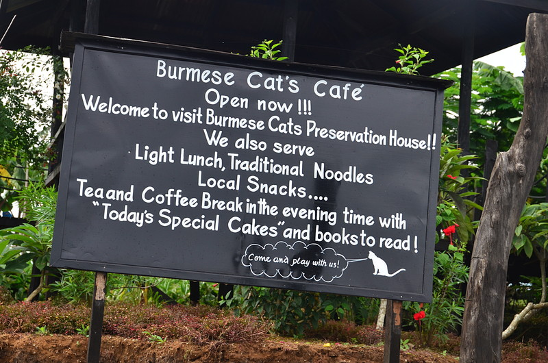 oct 12 1356 cat cafe sign
