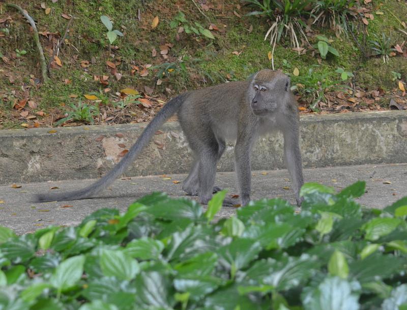 oct 12 6792 sicc monkey