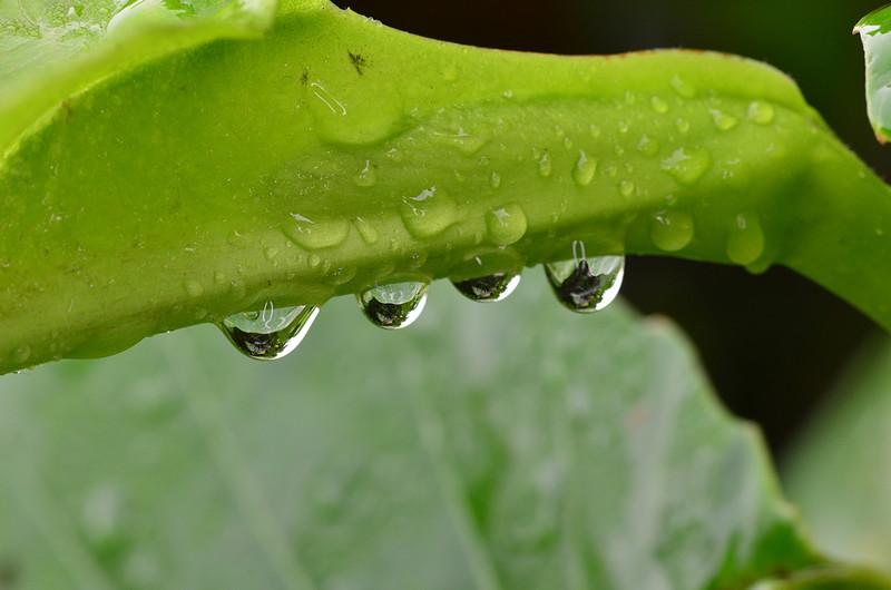 oct 15 4760 morning dew