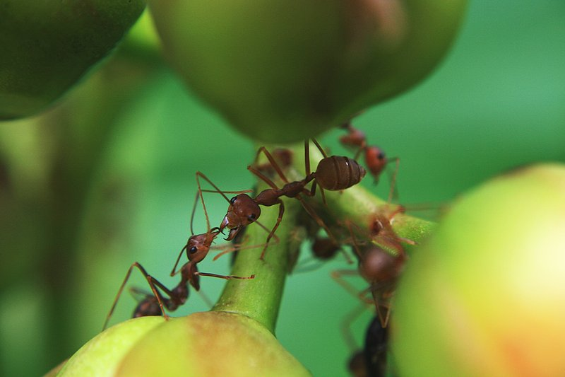 oct 20 0809 two ants