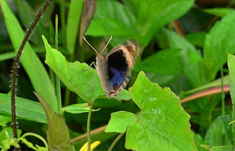 oct 20 4740 butterfly