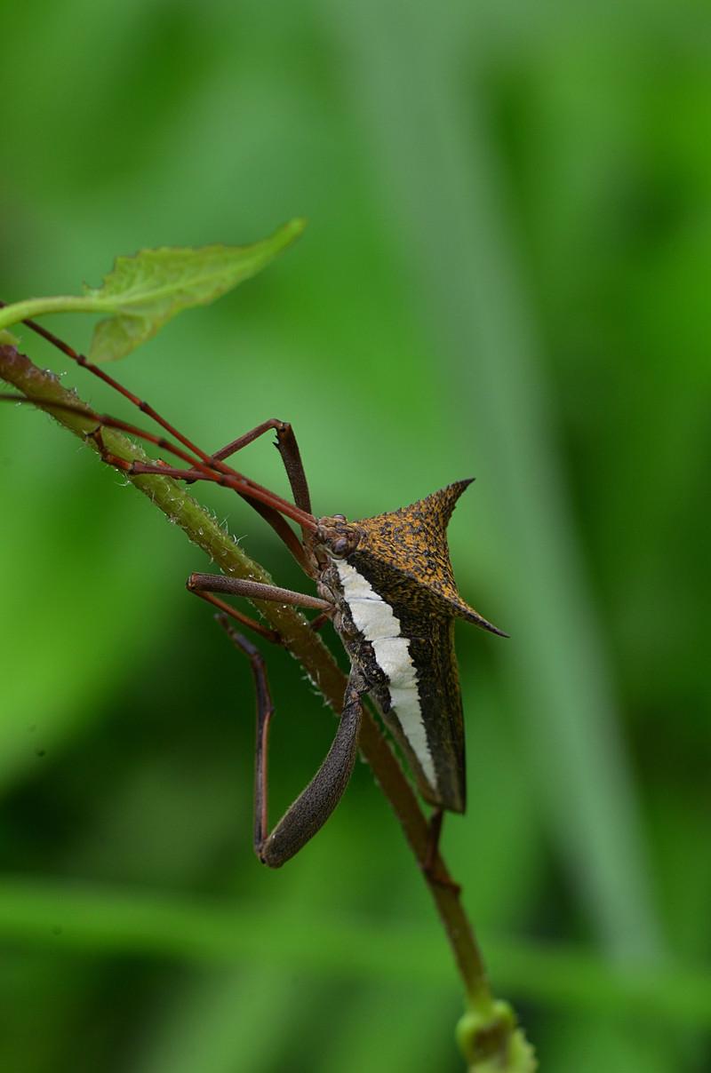 oct 20 4767 big bug