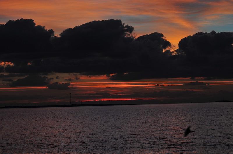 oct 24 3479 dawn bird