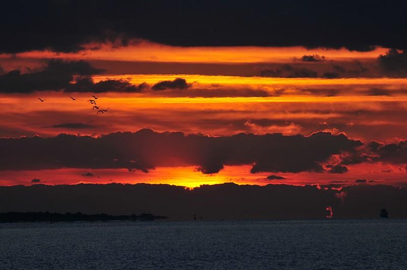 oct 24 3547 dawn birds