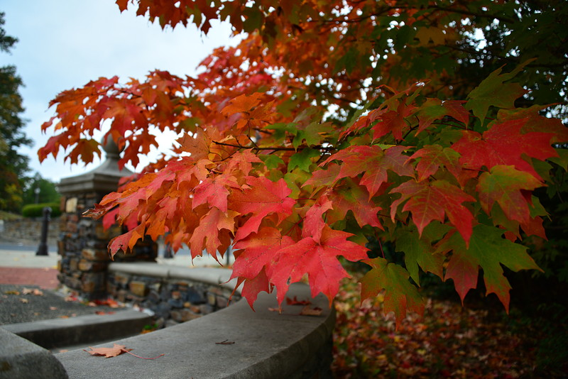 oct 27 0105 leaves