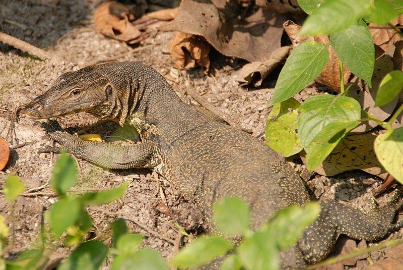 oct 28 0273 lizard