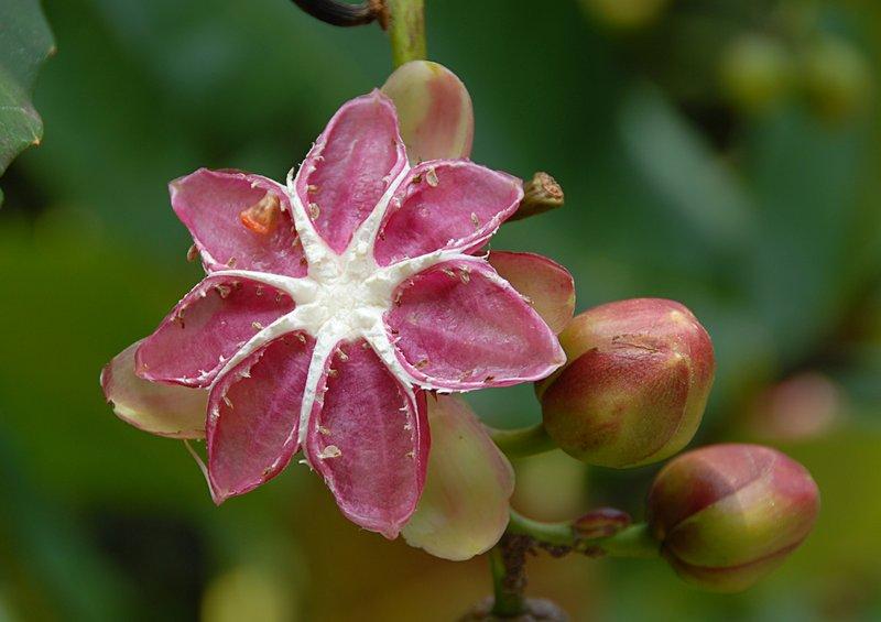 oct 28 0327 pink flower