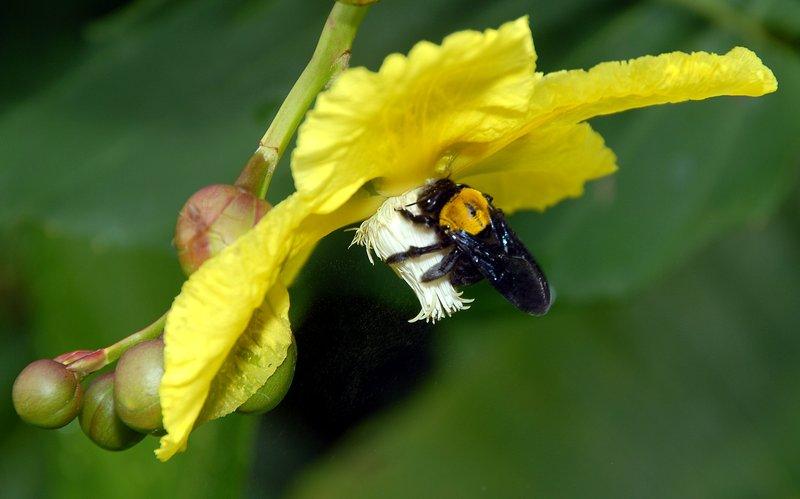 oct 29 8043 big bee