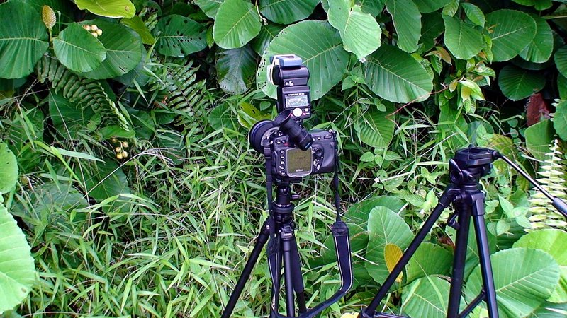 Camera and tripod setup